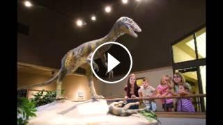 C14 Datierung von Dinosaurierknochen