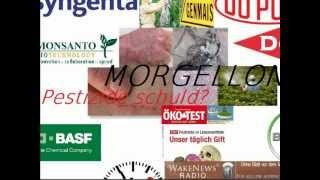 MORGELLONS - Sind Pestizide schuld Wake News Radio.wmv