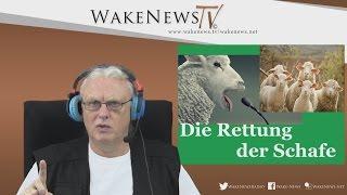 Die Rettung der Schafe – Wake News Radio/TV – Für alle, die aufwachen wollen!