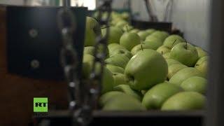 Die Zankäpfel: Russisches Agrar-Embargo trifft europäische Bauern hart