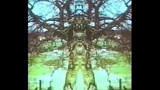 Paranormales - Der Blick auf die Wirklichkeit - Diese Spiegelgeschichte    Wolfgang Wiedergut