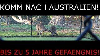 Australier in Indien duerfen nicht nach Australien! 5 Jahre Gefaengnis/ $66000 Strafe.