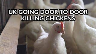 UK Going Door to Door Killing Chickens - Bird Flu as Cover Story
