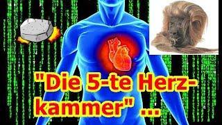 """Die 5-te Herzkammer!!!"" ..."