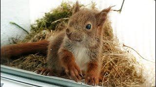 wundervolle Tierwelt - Eichhörnchen-Familie als Untermieter