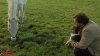 """Schönes Video vom Tierparadies """"Gut Aiderbichl"""" - Gib' die Hoffnung nie auf - die Zeit heilt alle Wu"""