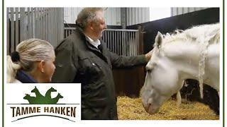 Feiger Angriff auf Tamme Hanke: Sein Pferd Jumper wurde vergiftet! | Tamme Hanken | Kabel Eins