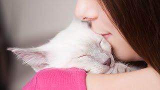 Katzen suchen deine Nähe ♥