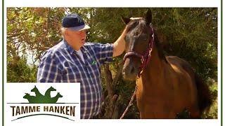 Gedanken-Energie manifestiert sich im Atem - Traumatisiertes Pferd lässt sich von Tamme anfassen | T