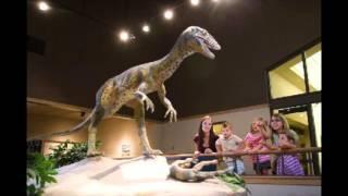 Dinosaurier gab es nie
