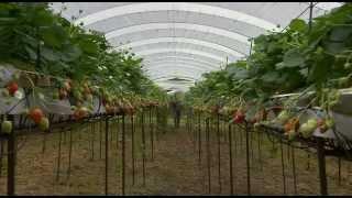 Die Brennessel - eine völlig unterschätzte und wertvolle Pflanze (Doku)
