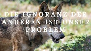 Wandernder Wolf 1 - Ignorance is king