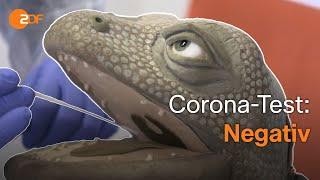 Exkursion ins Corona-Labor: Die Echse in der Welt der Viren   Echse auf Achse