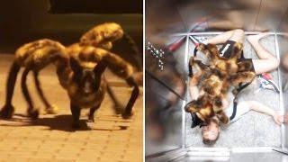 Total blöd - aber lustig ;-)  Die unglaubliche Mutation vom Hund zur Riesenspinne