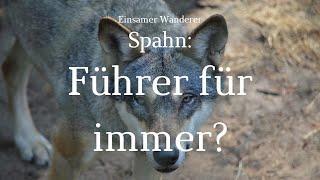 """Wandernder Wolf 13 - Spahn will """"Sonderrechte verstetigen"""" - kommt die Gesundheitsdiktatur?"""