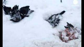 So viele tote Vögel:  Jetzt auch in Schweden