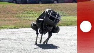 """Neuer Sprint-Roboter """"Wildcat"""" getestet"""