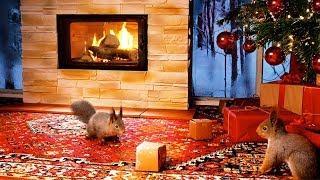 Weihnachtsfest für Hörnchen & Co - mit Musik