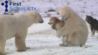 Das Märchen vom blutrünstigen Eisbär