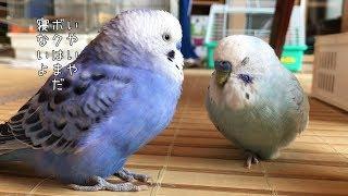 Wenn die Deutschen Vögel wären .....