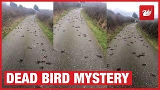 Hunder tote Stare fallent ot vom Himmel - war es 5G ?
