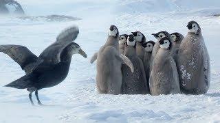 Pinguine - sehr beeindruckend - 1 Held ist auch dabei ☺