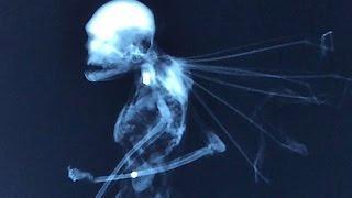 Sind das Fabelwesen, die real existieren oder kommen sie aus dem Versuchslabor ?