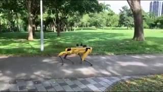 Roboter ist Aufpasser in Singapur - Corona Abstandsregeln