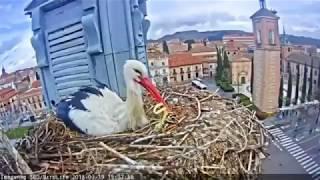 Storch frisst Gummiband - Der menschliche Müll ist überall