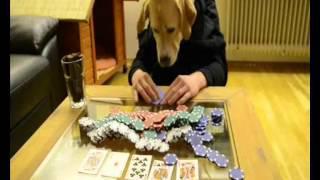 Was macht ein Hund zu Hause ?