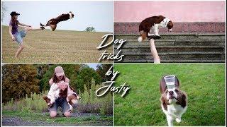 Border Collie - 4 Jahre alt - Kluge Hunde wollen lernen