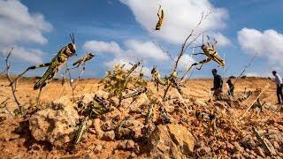 UN Warns of Mass Starvation, 'Biblical' Locust Plague Puts Millions On Brink of Famine