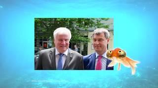 Sushi-News: Bayernwahl, Familiennachzug, Idiotenwatch und CDU Wahlprogramm in Hessen