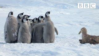 Pinguin ist ein Held - Soziale Verantwortung