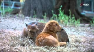 Der ehemals blinde Hund und das Reh
