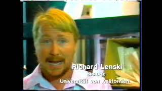 Genexperimente und Lobby 1990
