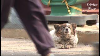 Die Treue eines Hundes - Hündin wartet 10 Jahre auf ihre Bezugsperson