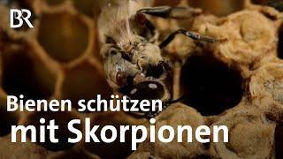 Bienen schützen - Bücherskorpione gegen Varroa-Milben- Doku - BR