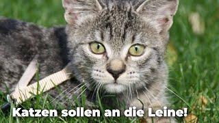 Katzen sollen an die Leine!