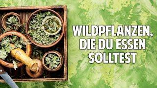 Das Geheimnis der Wildpflanzen: Welche du unbedingt essen solltest – Dr. Markus Strauß