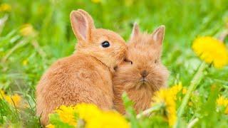 Bald ist es wieder soweit - der Frühling kommt und mit ihm neues Leben. Eine Ovation an alle Tiermüt