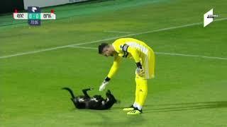 Der Hund hat das mit dem Spielen wohl falsch verstanden