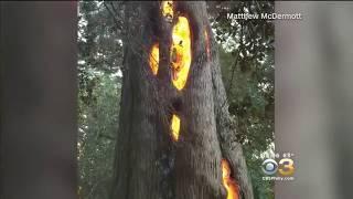 Brände in Californien - durch Energywaffen verursacht