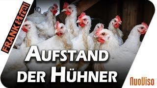 Aufstand der Hühner - Frank&frei