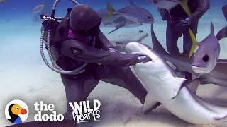 Die Hai-Flüsterin - sie befreit Haie von Angelhaken