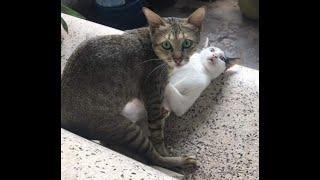 Katzen sind erstaunliche Tiere - seltene Aufnahmen, was sie so machen ...