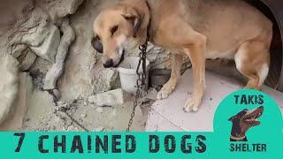 Befreiung von Kettenhunden