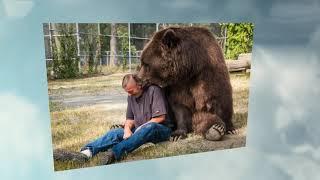 Wenn dir eiin Hund als Haustier zu klein ist - dann hole dir einen Grizzly