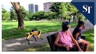 Singapur: Roboterhunde überwachen, ob Passanten den Corona-Abstand einhalten