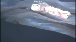 Seltsames quallenartiges Tier zufällig gefilmt
